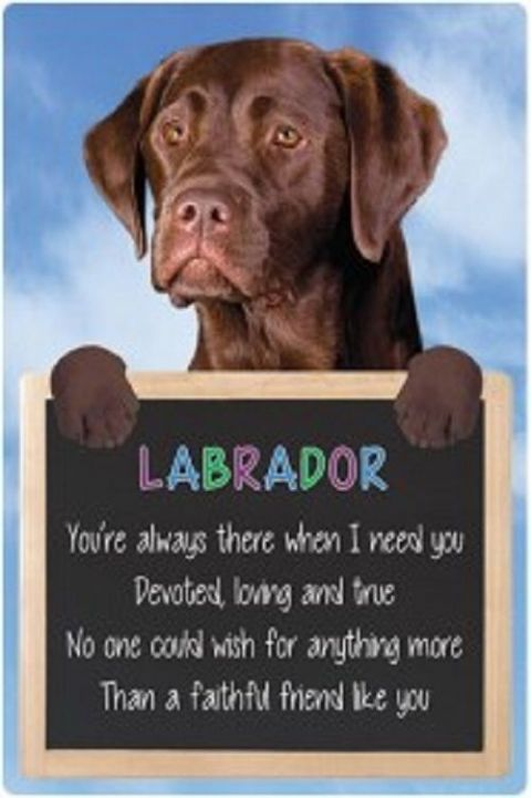Chocolate Labrador 3D home hang up sign